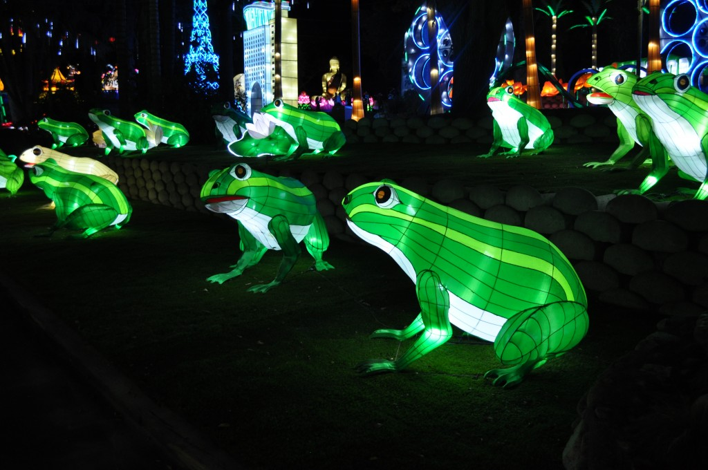 Frogs : LACF Luminasia